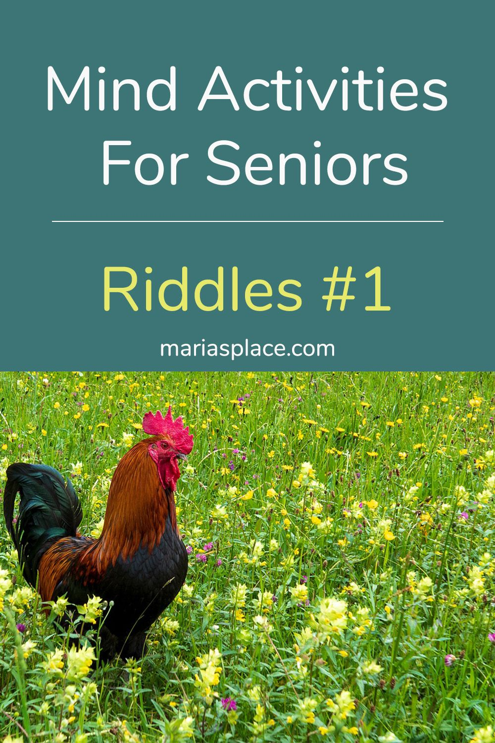 Riddles 1 in 2020 (With images) Senior activities