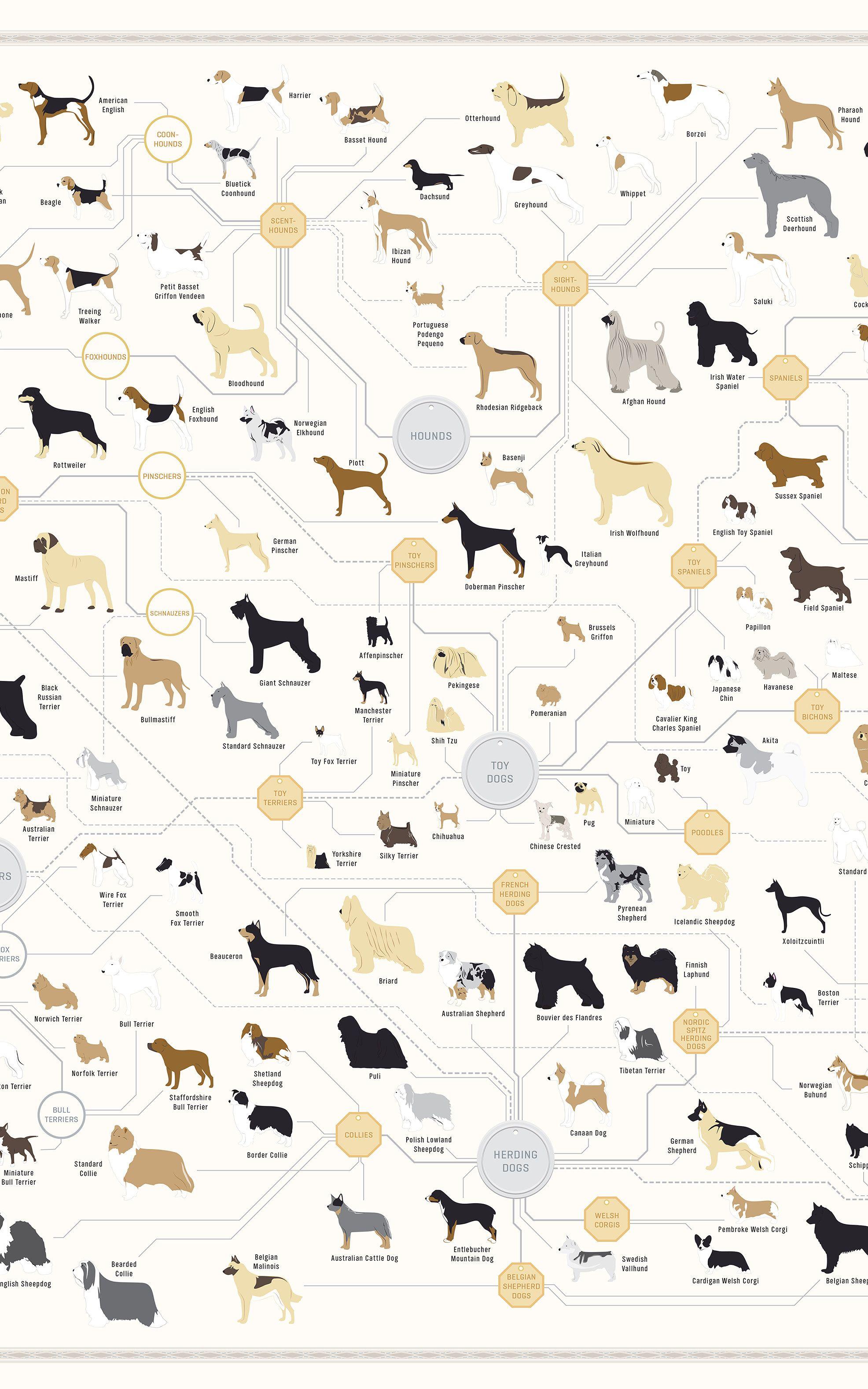 181 Breeds Of Dog On One Awesome Poster | Pfoten, Hunde und Anatomie