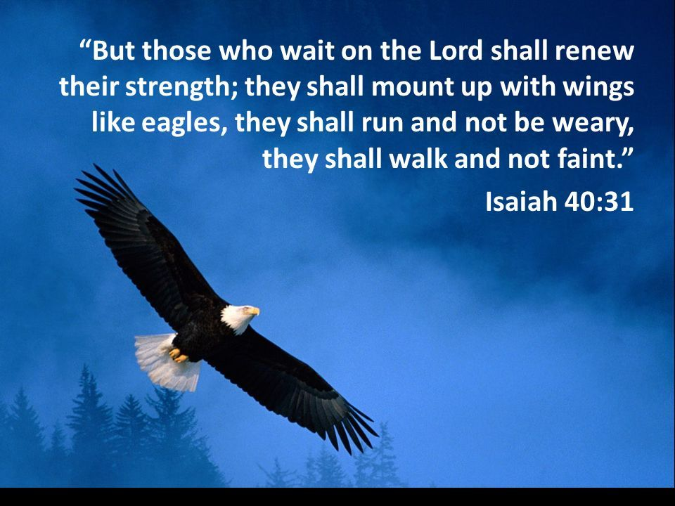 But they that Wait upon the LORD!!   Wait upon the lord, Lord, For god so loved the world