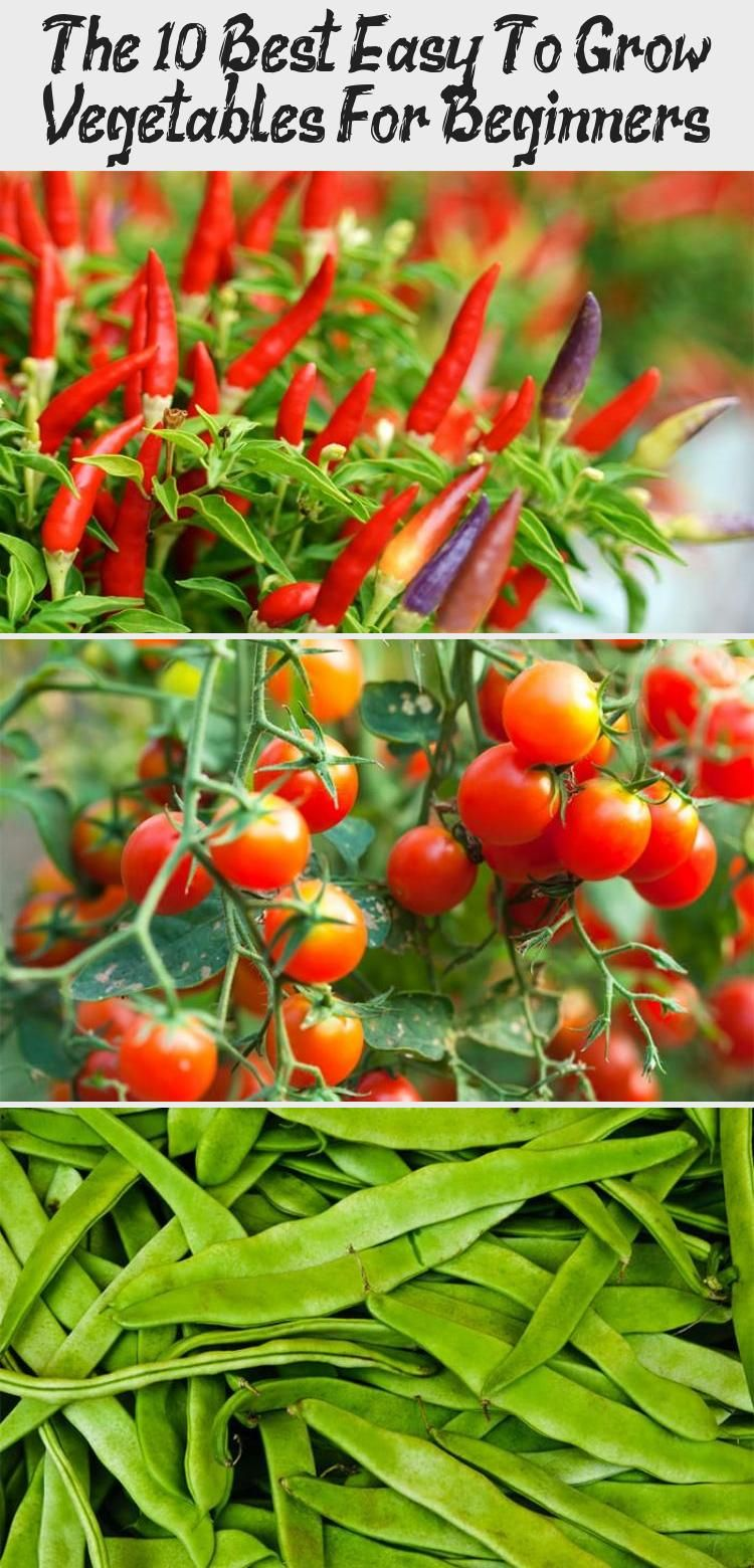 The 10 Best Easy To Grow Vegetables For Beginners In 2020 Easy