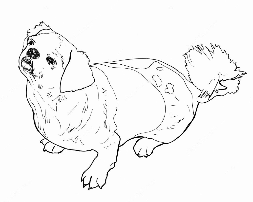 32 Shih Tzu Coloring Page Sleeping Beauty Coloring Pages
