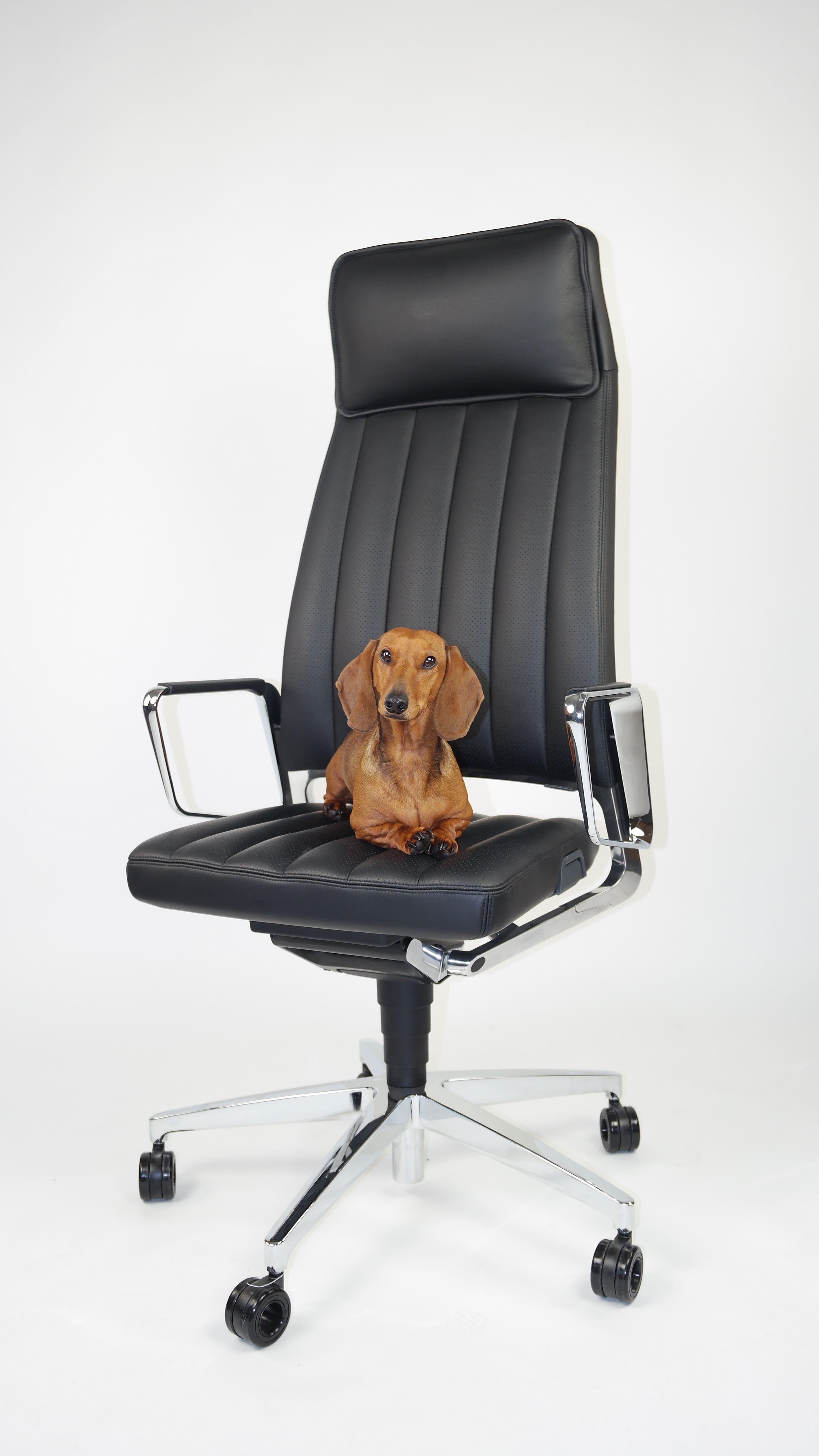petsatwork officedog officechair Interstuhl Vintage