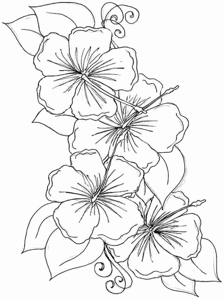 Flower Coloring Page Free New Hibiscus Flower Coloring Pages Download And Print In 2020 Flower Coloring Pages Printable Flower Coloring Pages Whale Coloring Pages
