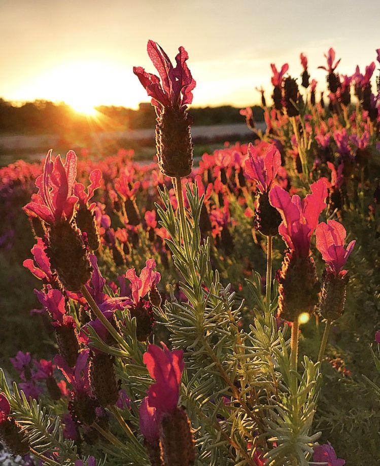 Panorama Tavoli Da Giardino.Sunset Panorama Bellezza Garden Giardino Countrylife Fiori