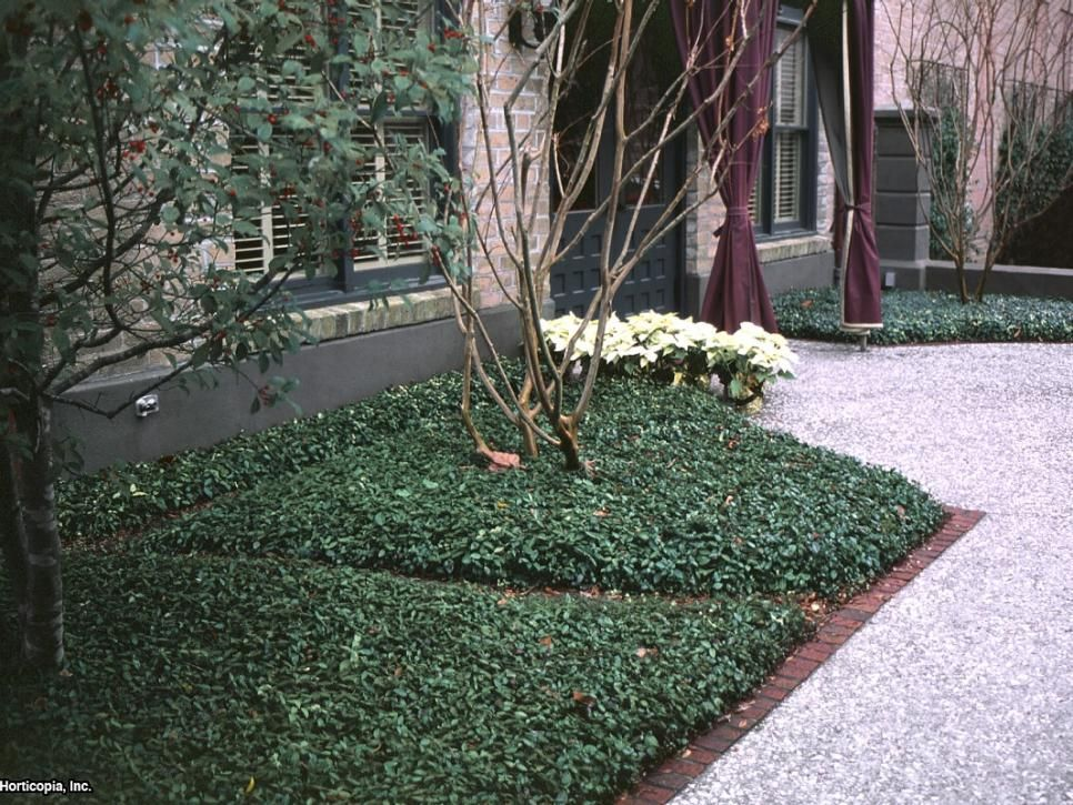 replace your lawn with these groundcovers landscaping plantslandscaping ideasflorida