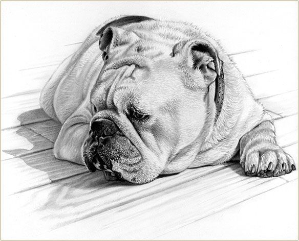 pencil drawing | Artsy Fartsy | Pinterest | Dibujo, Lápiz y Animales