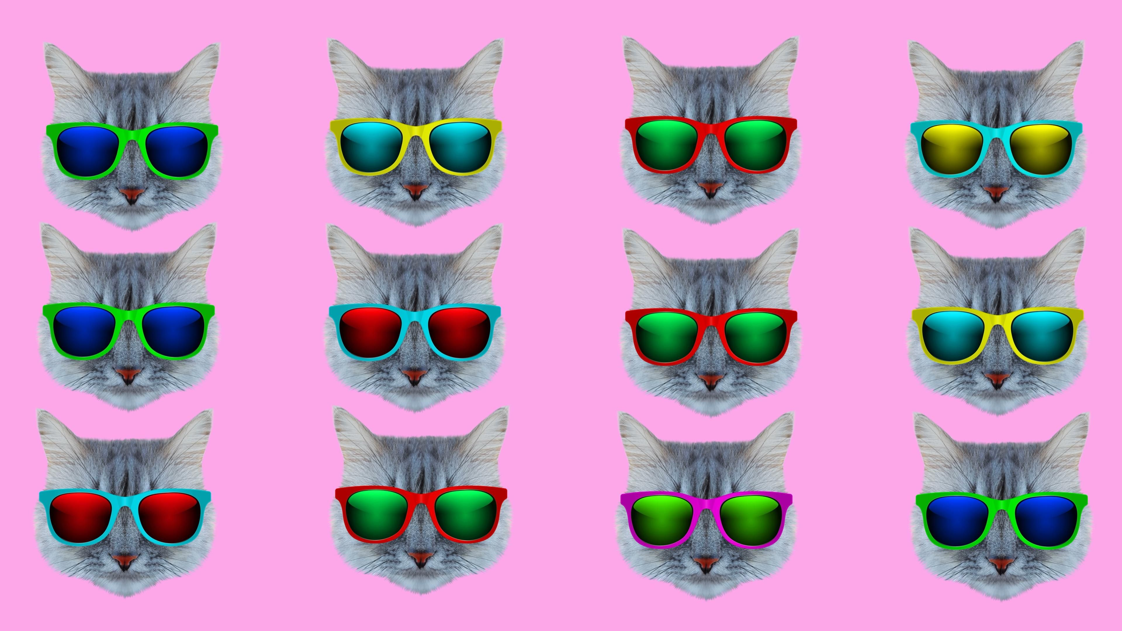Free Motion Graphic Virtual Background Cool Cats Kittens Sunglasses Neon Summer Vj Loop Video Cat Background Motion Graphics Wallpaper