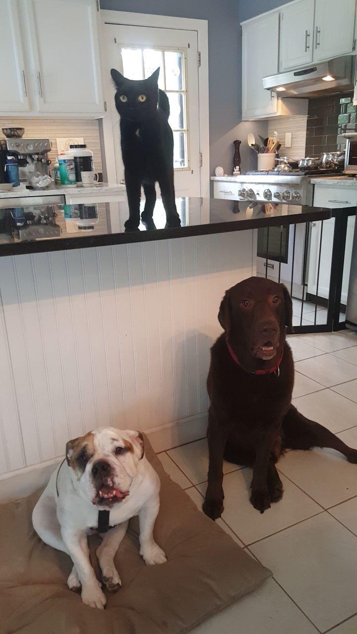 Adopt Lola On Bulldog Rescue Pet Search Adoption