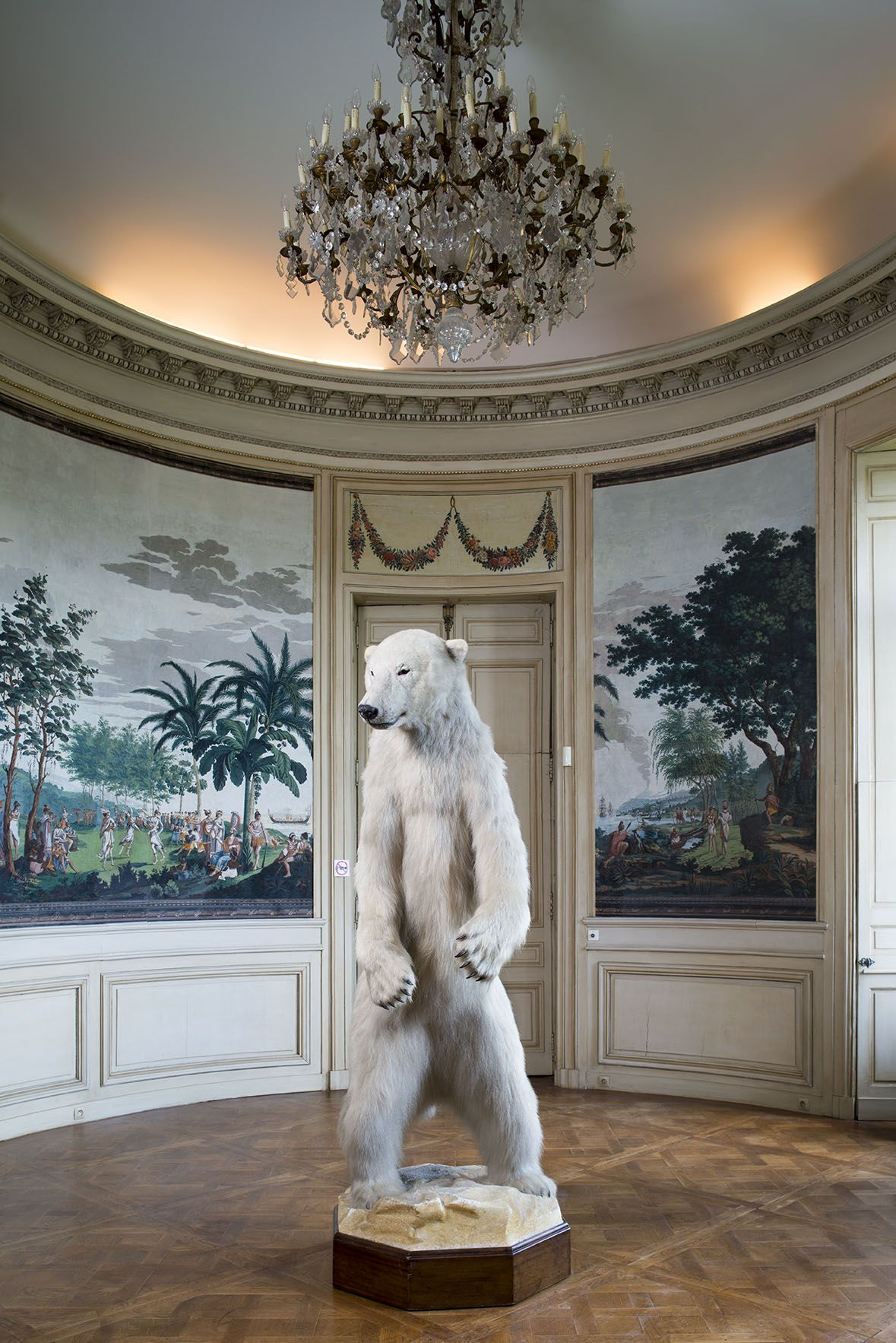 taxidermie a paris