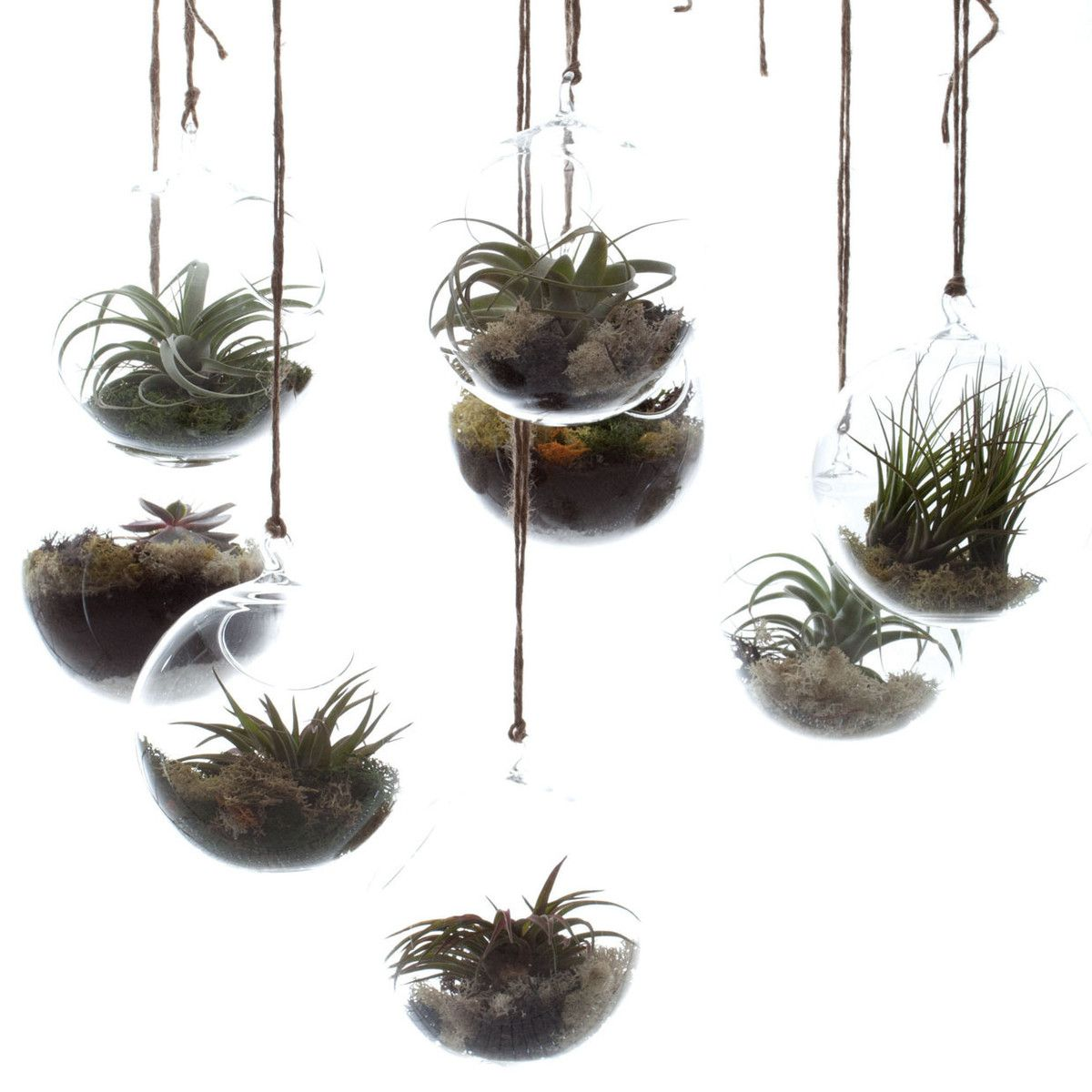 Awesome Hanging Terrariums. Looks Like A Garden From The