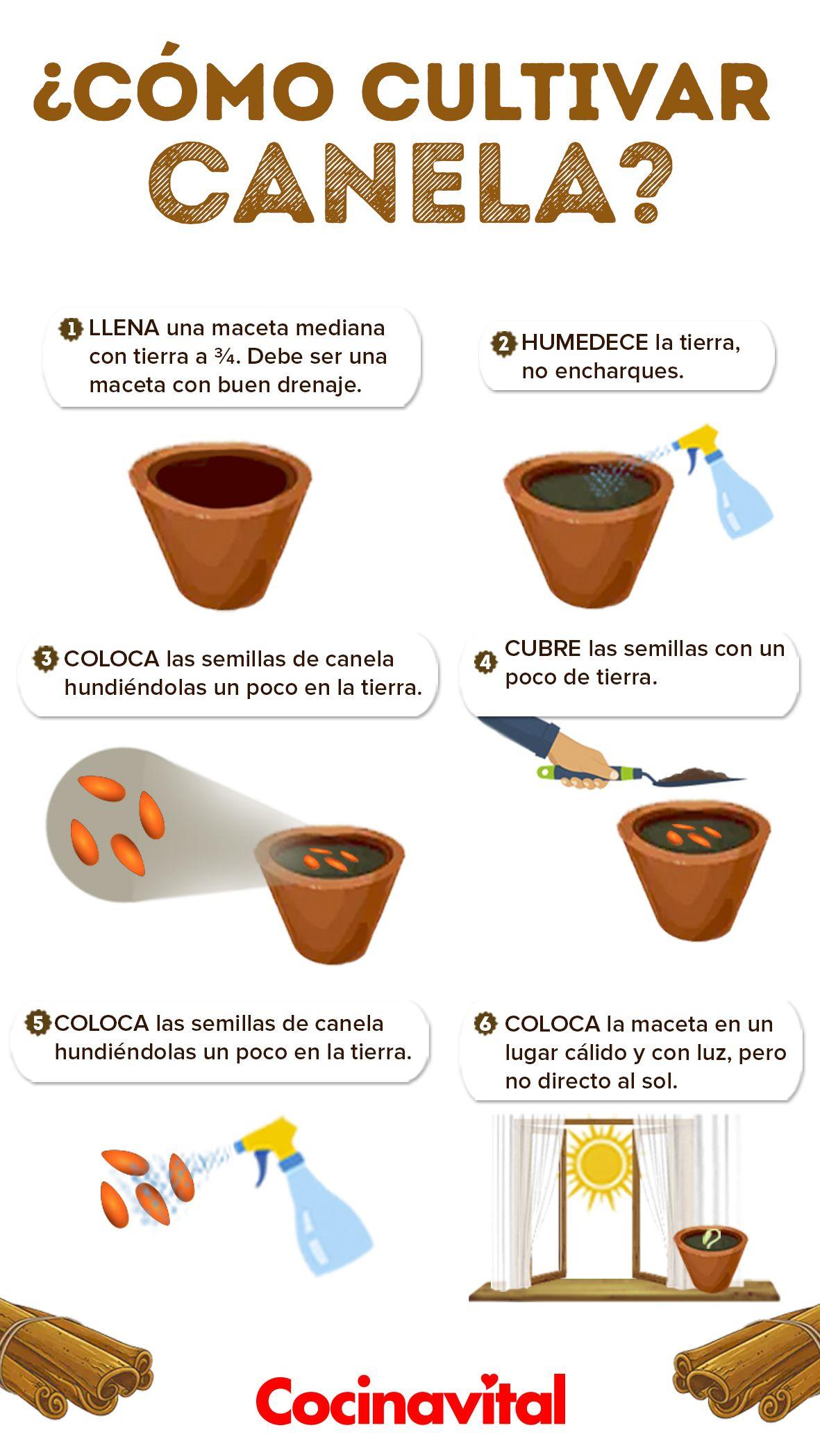 Cómo Cultivar Tu Propia Planta De Canela En Casa Jardín De Productos Comestibles Cultivo De Plantas Limonero En Maceta