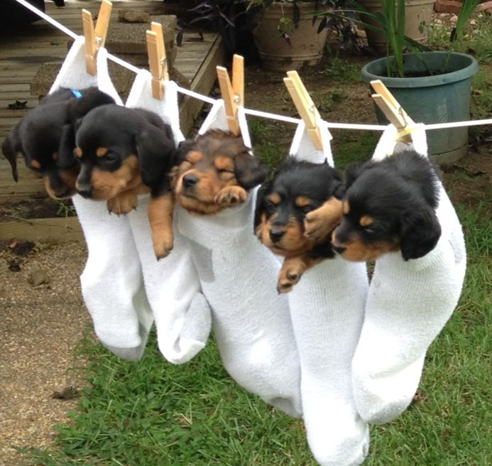 Hung Them Up To Dry After Their First Bath Baby Dogs Cute Dogs