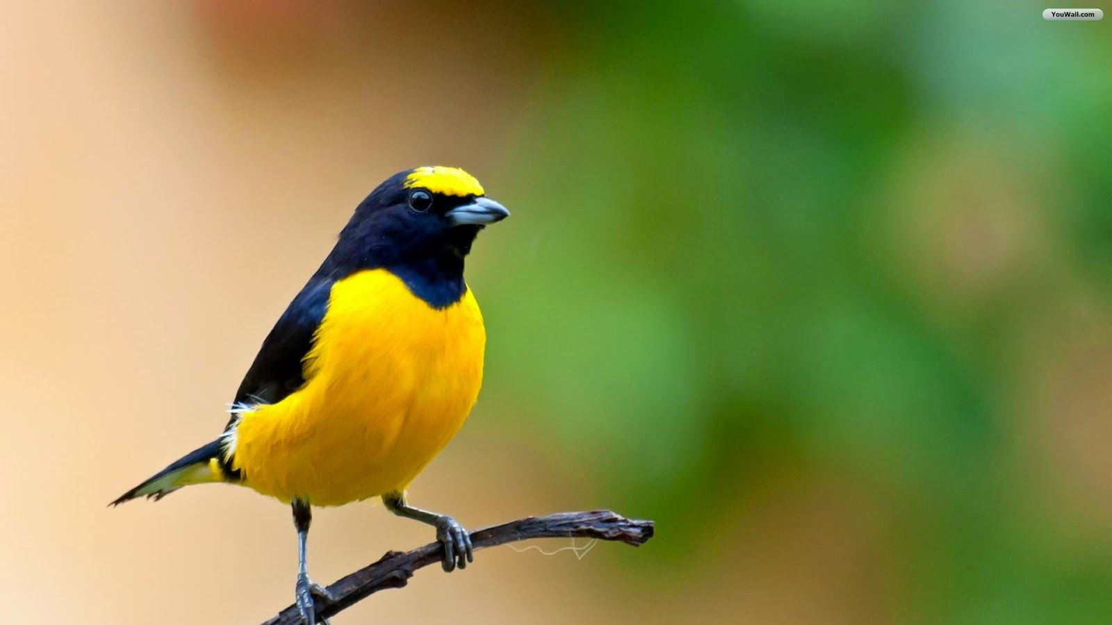 different color birds hd wallpapers - Bird Pictures To Color