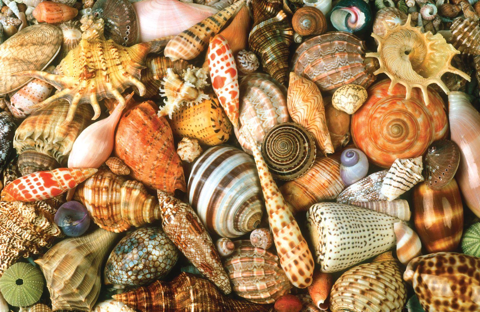 a magia do mar #3: usando as conchas | mosaics
