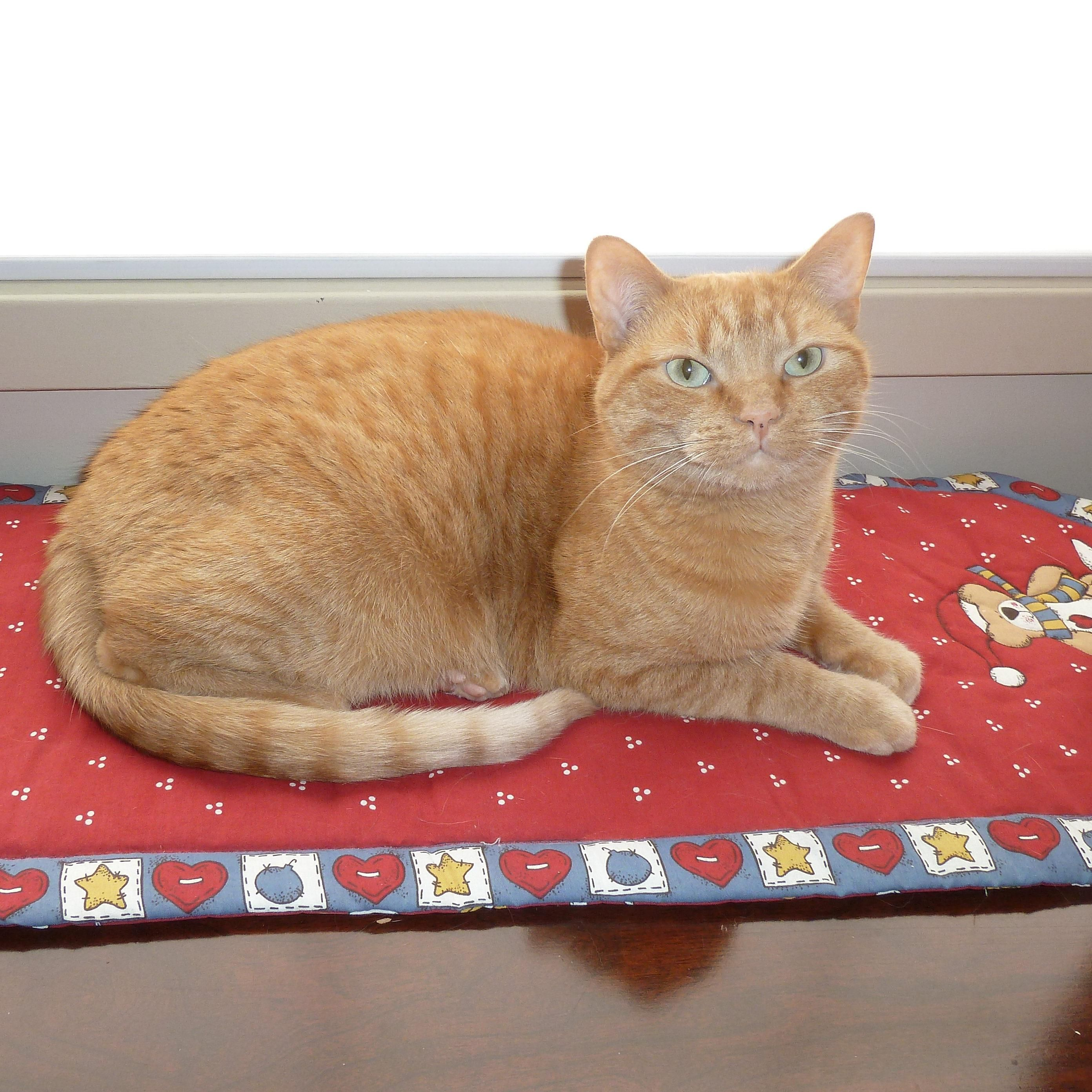 Star cat peko modern cat photo contest cats