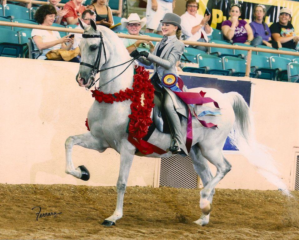 Newhorse Com American Saddlebred Horses Beautiful Arabian Horses Eventing Horses