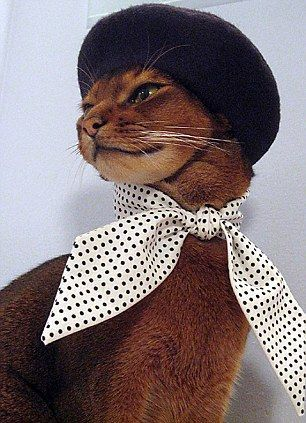 Ready for the Catwalk...the amazing 'haute CAT-ture' for the fashion-conscious feline - Humour #Amazing #CATture #Catwalkthe #fashionconscious #Feline #haute #Humour #ready #Cute #CutePets #Pets