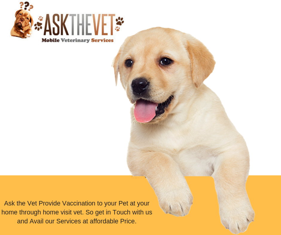 Get in Touch with Ask the Vet and get Proper Care of your