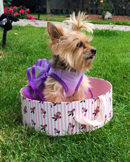 Pets Martha Stewart Pets Pets Beloved Dog