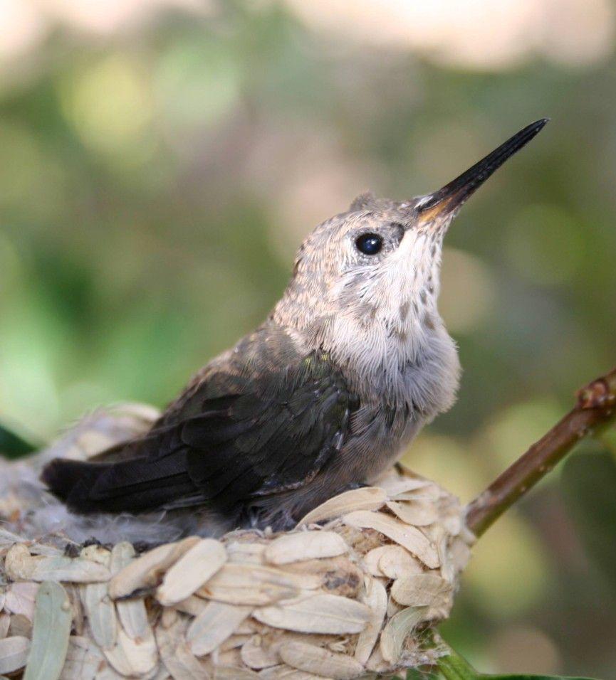 Look at The Sky Look at the sky, Birds, Baby hummingbirds