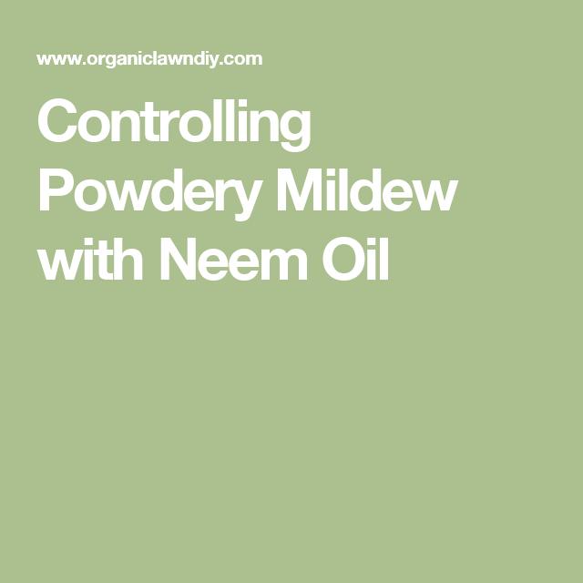 Controlling Powdery Mildew with Neem Oil