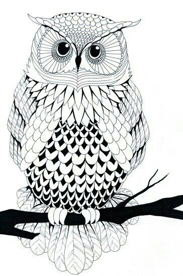 Pin by Susan Carrell on Digital - Owls Owl coloring pages, Black