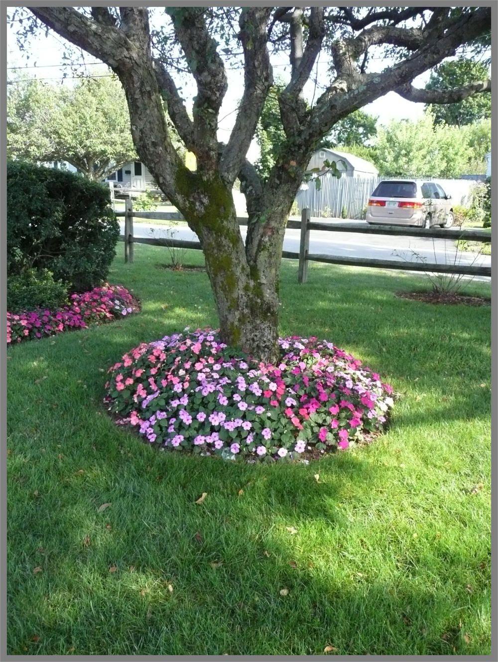A simple garden bed of mixed color impatiens is the
