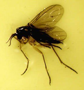 Gnat Gonna Live With It Getting Rid Of Indoor Gnats How To Get