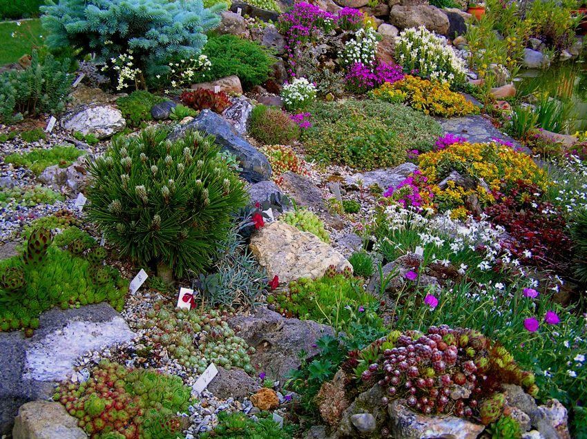 alpine pflanzen am gartenteich garten alpine garden outdoor gardens und garden inspiration. Black Bedroom Furniture Sets. Home Design Ideas