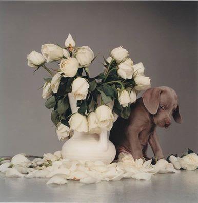 Iată cea mai drăguță vază pe care am vazut-o în ultima vreme: http://bit.ly/21RAkEi  #magazinuldecase #decorvaza
