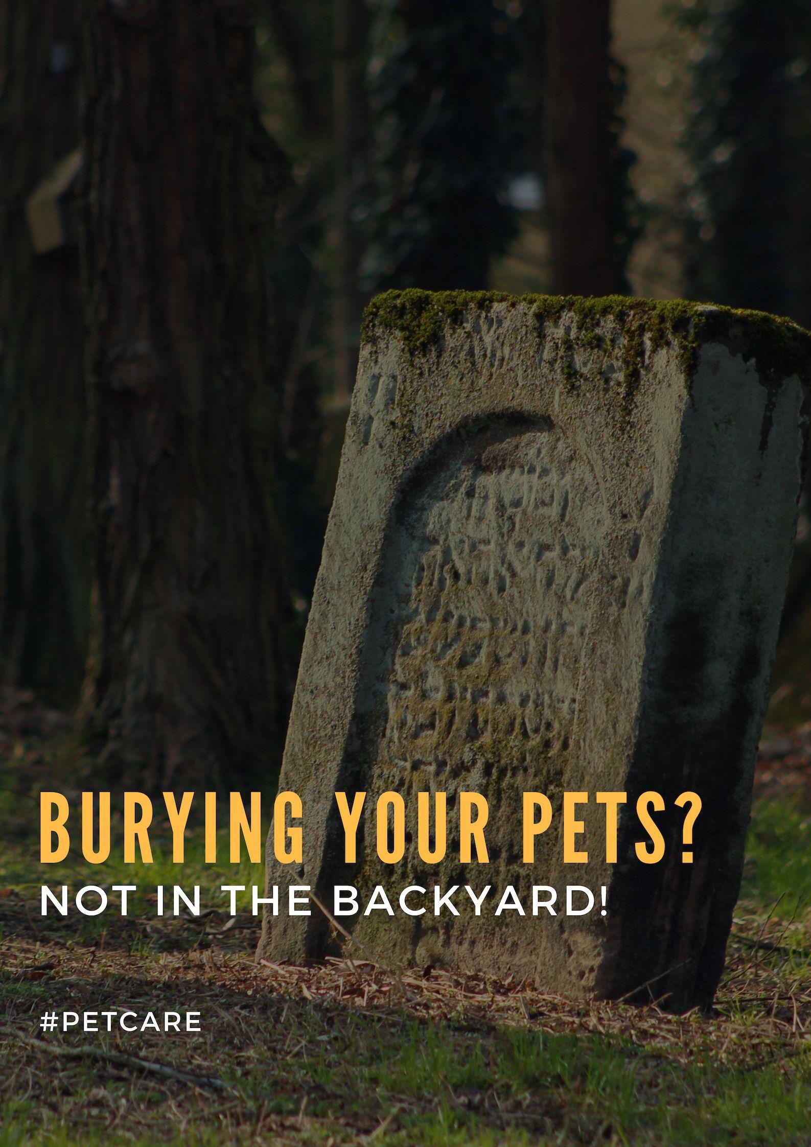 Can I Bury My Dog In The Backyard - BACKYARD HOME