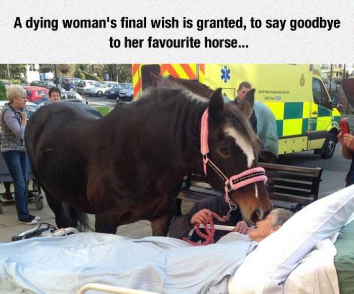 Cute Horse Quotes: Saying Goodbye For The Very Last TimeI Cried When £ Saw