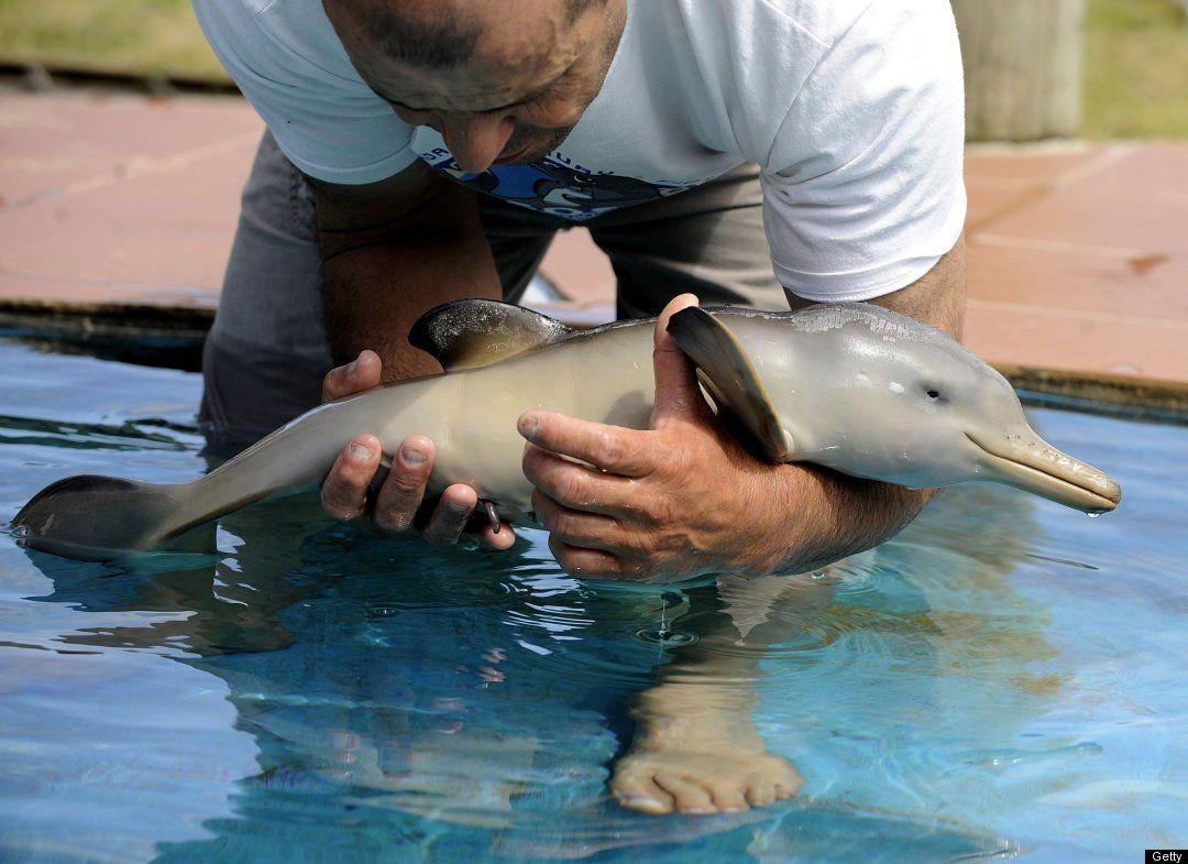 Baby Dolphin Baby Dolphins Cute Animals Cute Animal Photos