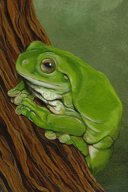 "Frog Art...by Fiona Groom ""Frog""acrylic On Canvas Www"