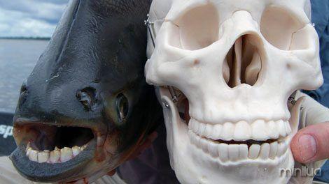 Hooked IV: Vampire Fish NGC-US: Ep. Code 4255