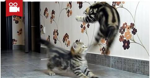 Funny Cats Compilation Of Fighting Dancing Kittens Funny