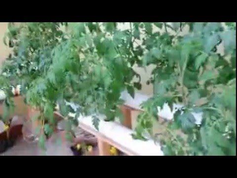 تدريب عملي خطوة بخطوة علي زراعة الأسطح والهيدروبونك Books Free Download Pdf Pdf Download Plants