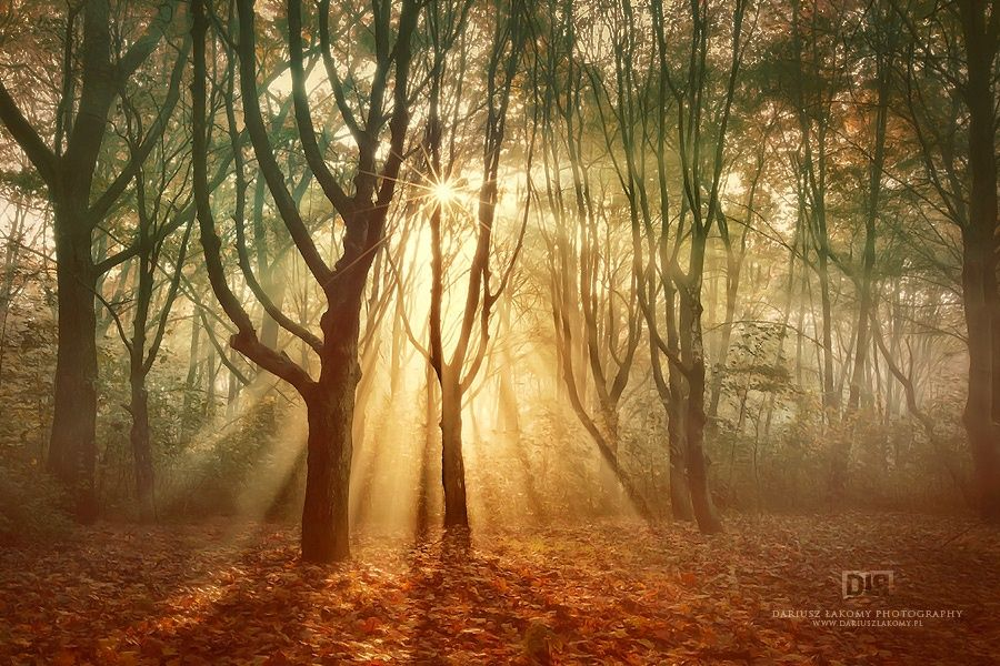 The way of golden light by Dariusz Łakomy on 500px