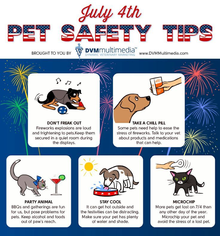 Summer Pet Safety & Happy 4th of July | Wag 'n Woof Pets