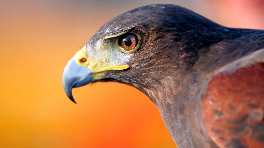 Eagle Beak Samsung Note5 Hd Wallpaper Download Eagle Pictures Eagle Wallpaper Amazon Birds