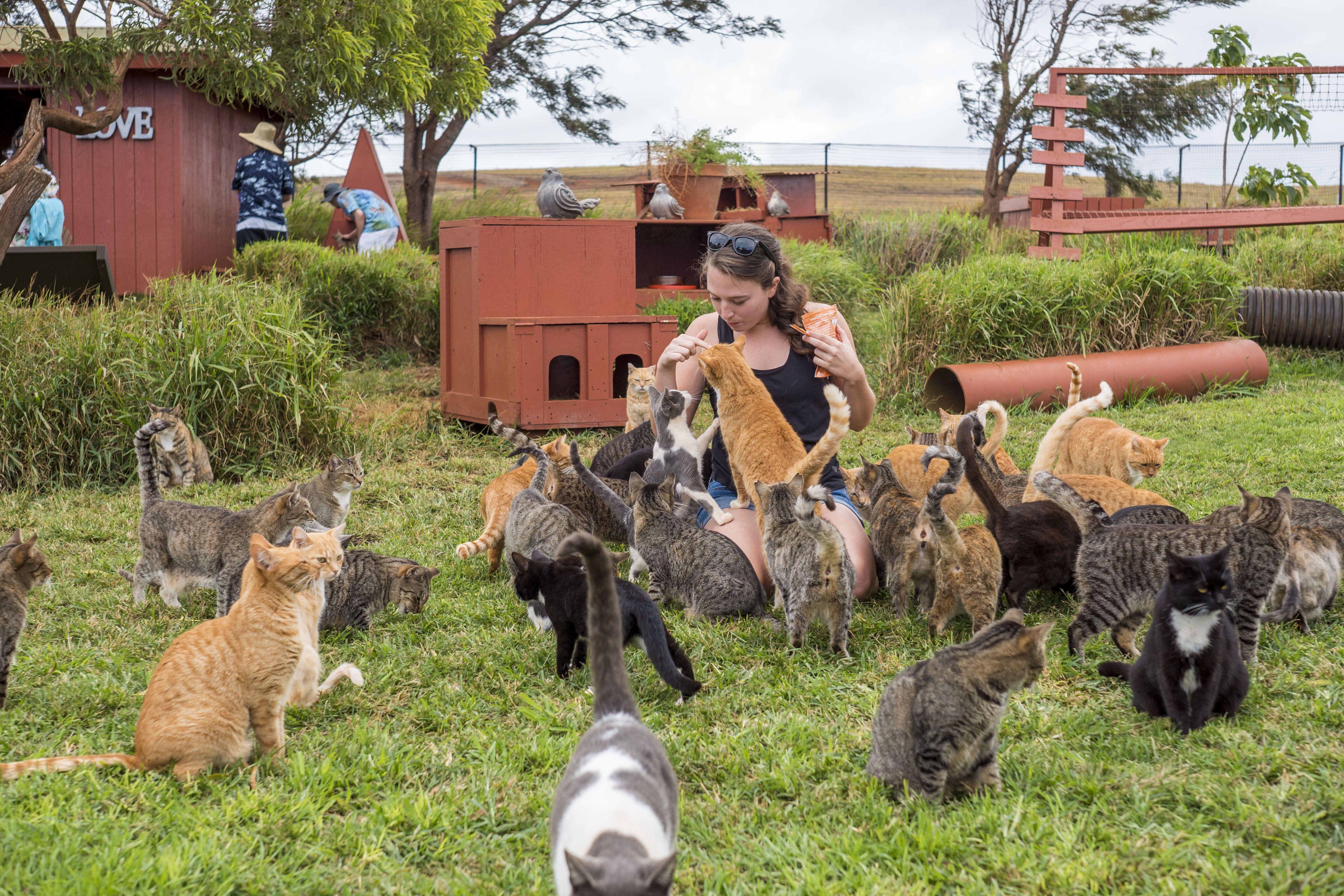 Inside the Hawaiian Cat Sanctuary Where 622 Strays Are