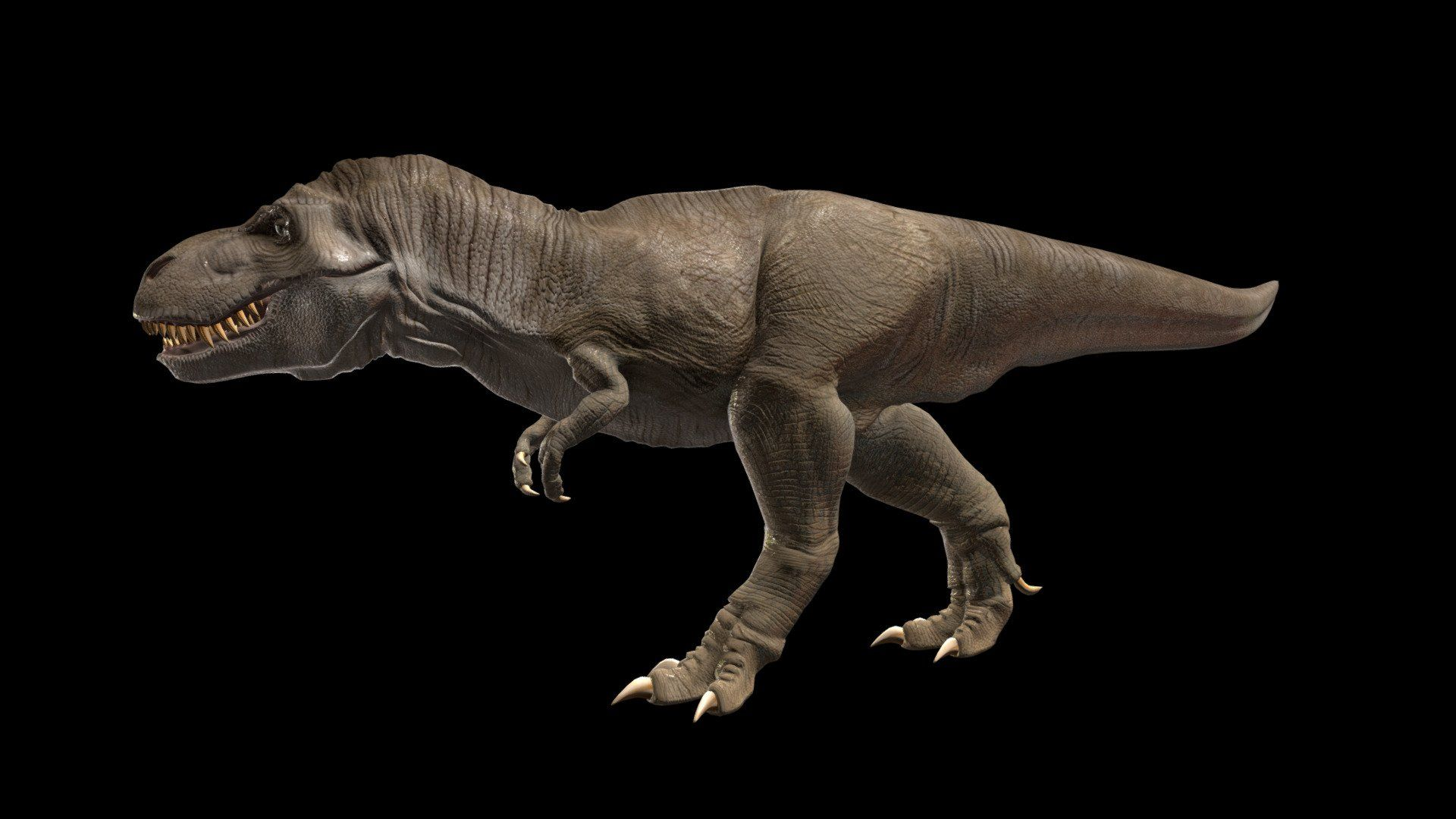 Tyrannosarus rex (Free model) Download Free 3D model by