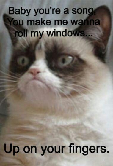 Grumpy Cat Floridageorgialine Funny Grumpy Cat Memes Grumpy Cat Humor Grumpy Cat