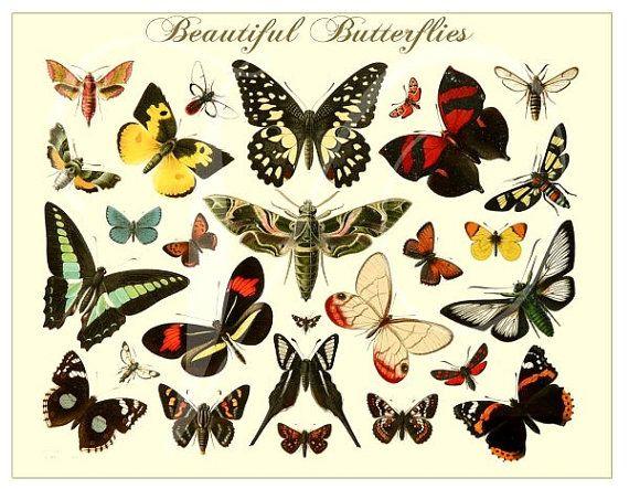Antiguos bellas mariposas PRINT Vintage 1800 por vintagewarehouse ...