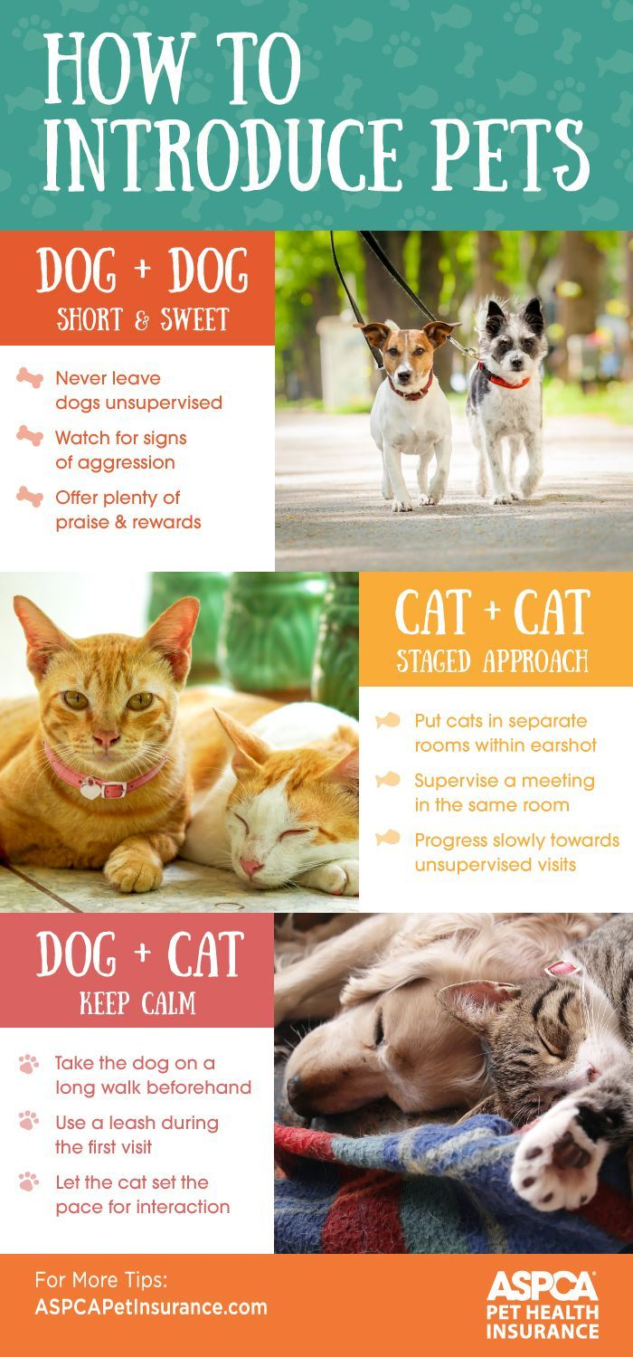 Making Friends Introduction Socialization Tips Pets Pet Care
