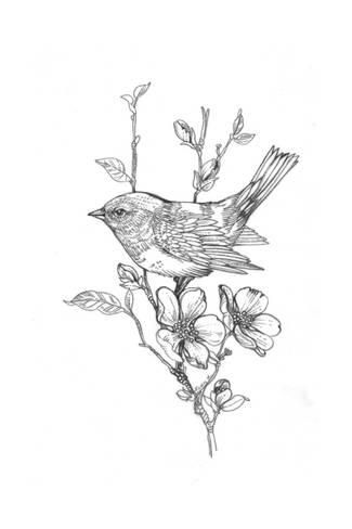 Art Print: Line Drawing of Bird on Flowering Branch