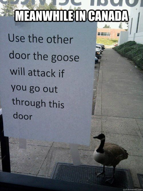 canada goose 9gag