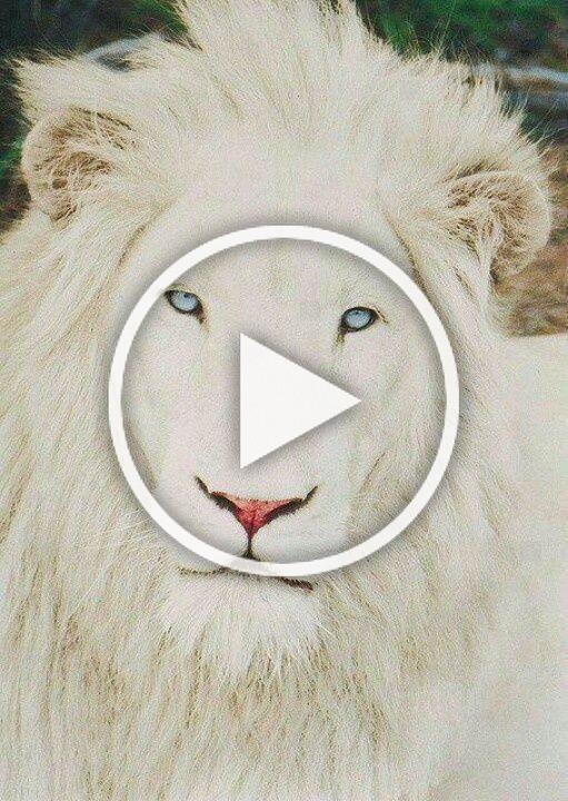 Photo of Beautiful Albino Animals Updated #albinoanimals Beautiful Albino Animals Updated…