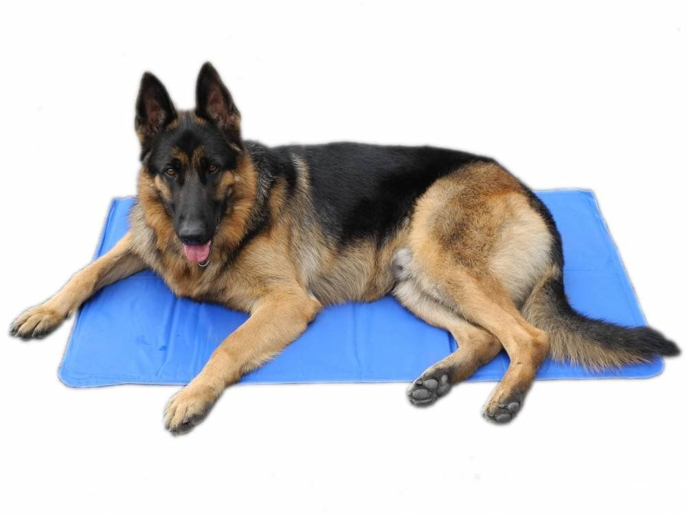 Go Pet Club Gpc8043 Pet Cooling Mats Blue Check Out This Great Product This Is An Amazon Affiliate Link Dog Bed Mat Pet Cooling Mat Your Dog