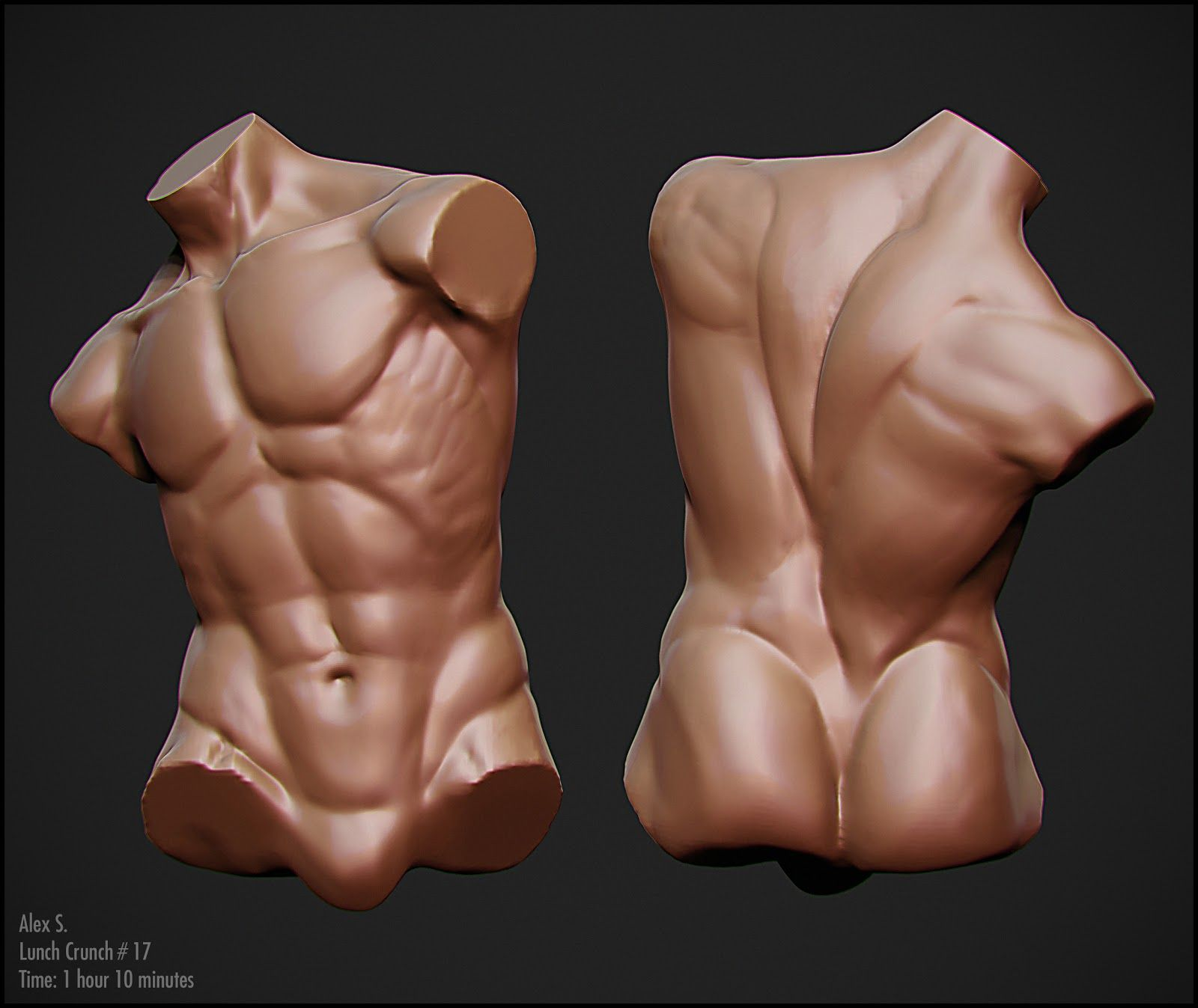 Male Torso Reference Pinterest Anatomy Male Torso And Anatomy